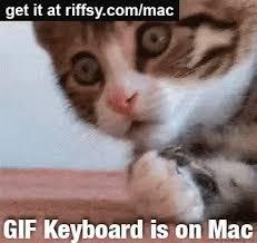 Keyboard Cat Meme - keyboard cat gif gifs tenor
