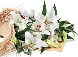 casablanca lilies casablanca lilies flowerbud