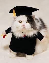 cat costume academic gown graduate cat costume suddenly cat