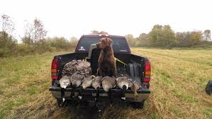 dog hunting truck howling storm outdoors registered maine guide canada goose hunting