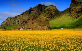 Flower Field Wallpaper - yellow flower field wallpaper 6816500