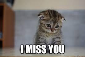 Miss U Meme - i miss you i miss you sad kitten dad pinterest deep thoughts