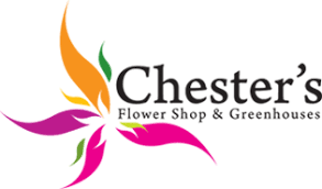 chester s flowers of utica ny is the best place to get floral