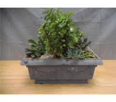 Plant Delivery Plants Delivery Athens Ga Flowers Inc