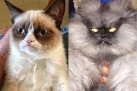 Colonel Meow Memes - the most famous cats on the internet tard the grumpy cat vs