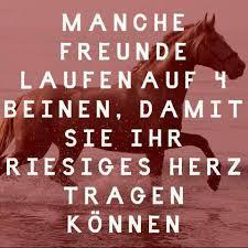 pferde spr che wer kennt schöne pferdesprüche englisch pferde sprüche