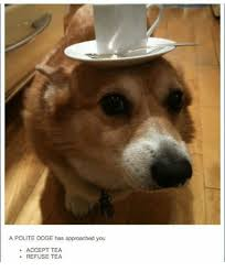 Doge Meme Tumblr - a polite doge has approached you accept tea refuse tea doge meme