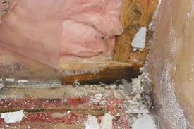 mold in basement gallery of best ideas about mold in basement on