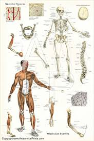 Full Body Muscle Anatomy 168 Best Anatomy Images On Pinterest Human Anatomy Massage