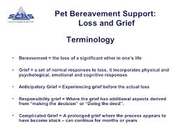 grieving the loss of a pet pet bereavement support loss and grief