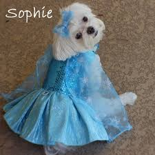 Halloween Costumes Yorkies Icy Princess Snow Queen Halloween Costumes Dogs