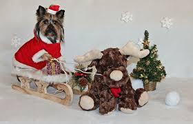 dog christmas christmas dog images pixabay free pictures