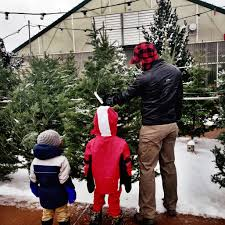 o christmas tree o christmas tree u2026 u201d u2022 fort collins nursery