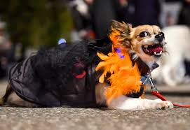 dog costumes spirit halloween halloween costume ideas for pets 2015 how dogs cats owners can