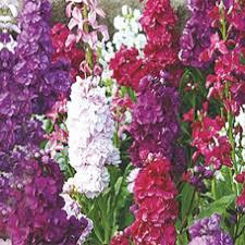 buy flowers online 19 best kraftseeds buy online flower seeds images on