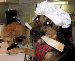 Dog Cooking Meme - irti funny picture 587 tags dog cooking cat chef kitchen