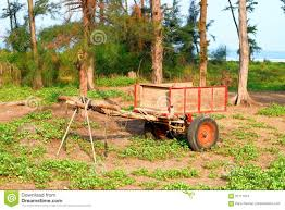 indian cart a wooden cart among trees in an indian village stock photo image
