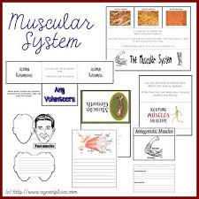 best 25 skeletal and muscular system ideas on pinterest systems