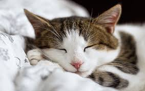 imagenes de gatitos sin frases 50 frases de gatos que no desearas perderte