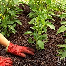 Home Vegetable Garden Ideas Beginner Vegetable Garden