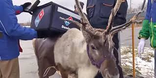 domino pizza jombang domino s tried a reindeer delivery program you can guess how that