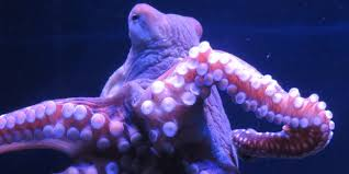 what all can an octopus do