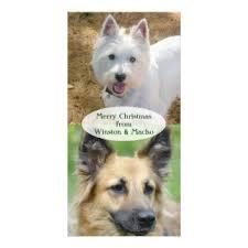 dog christmas photo cards dog christmas photo card templates