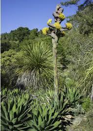 native plants southern california virtual tour friends of the regional parks botanic garden