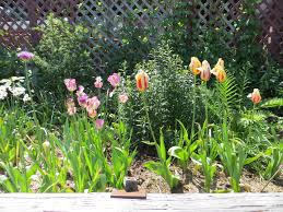 9 may annuals hell continues tangly cottage gardening journal