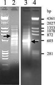 tissue wide expression profiling using cdna subtraction and