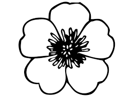 fiori disegni disegno da colorare fiori cat 13827