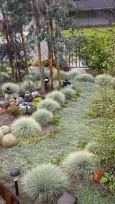 the most poisonous plants in australia hipages com au 47 best front yard images on pinterest landscaping shrubs and