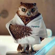 americas best owl commercial actress seven television commercial owls