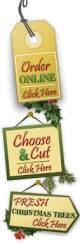 nc choose and cut christmas tree farms order live christmas trees