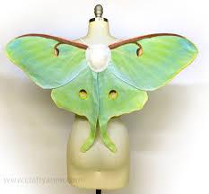 butterfly wings tutorial crafty