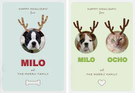 pet cards from minted milk