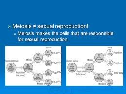 sexual reproduction and meiosis meiosis sexual reproduction