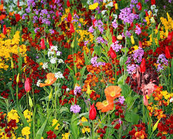 Types Of Garden Flowers Growing The Best Flowers In Town Landscaping Gardening Ideas