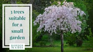 three trees suitable for a courtyard or small garden