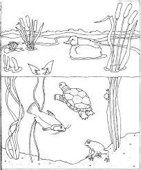 aquatic biomes coloring pages