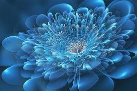 Blue Flower Backgrounds - blue flowers wallpaper