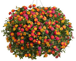 Fake Plants Home Depot Top 25 Best Fall Hanging Baskets Ideas On Pinterest Harvest