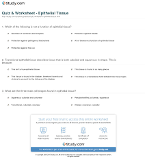quiz worksheet epithelial tissue best anatomy and physiology 1