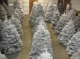 flocked trees palmer u0027s christmas trees