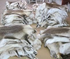 Reindeer Hide Rug Reindeer Hides Skins Pelts Fur Wholesale From Finland 115 00