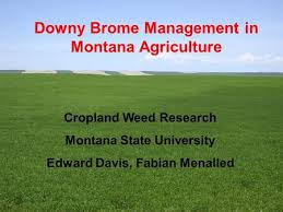 evaluating chemical fallow herbicides potential