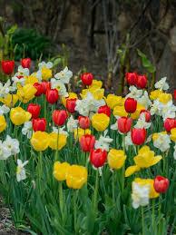 spring color plants for spring color spring garden design hgtv