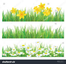 vector daffodil flowers grass chamomiles isolated stock vector