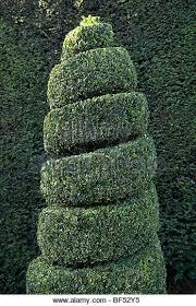 English Box Topiary - box hedge topiary stock photos u0026 box hedge topiary stock images