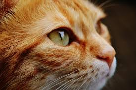 2048 cute kitty